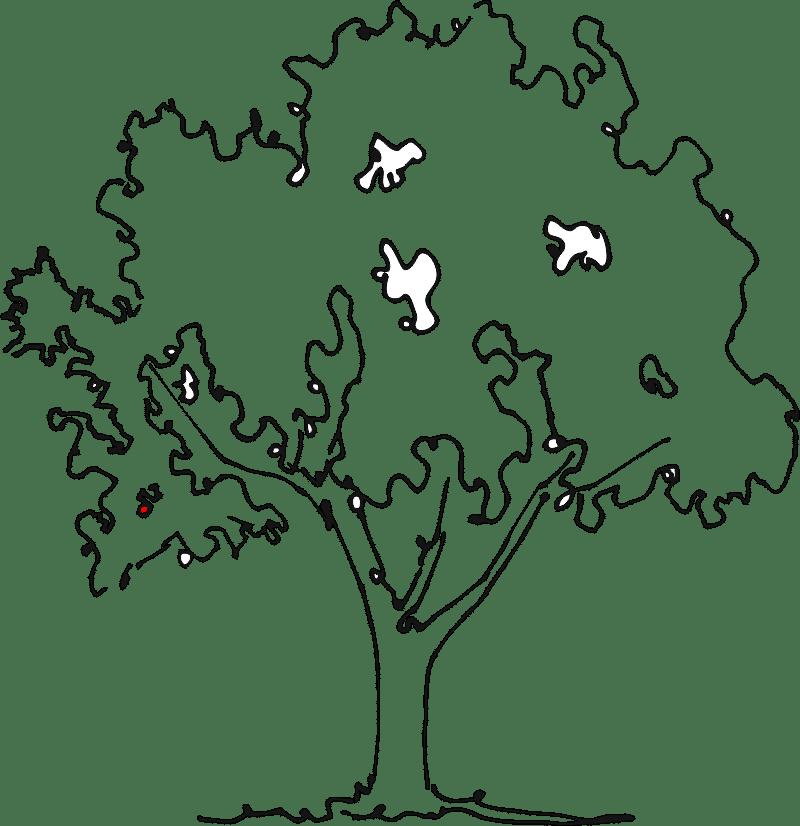 Apple Tree no fruit