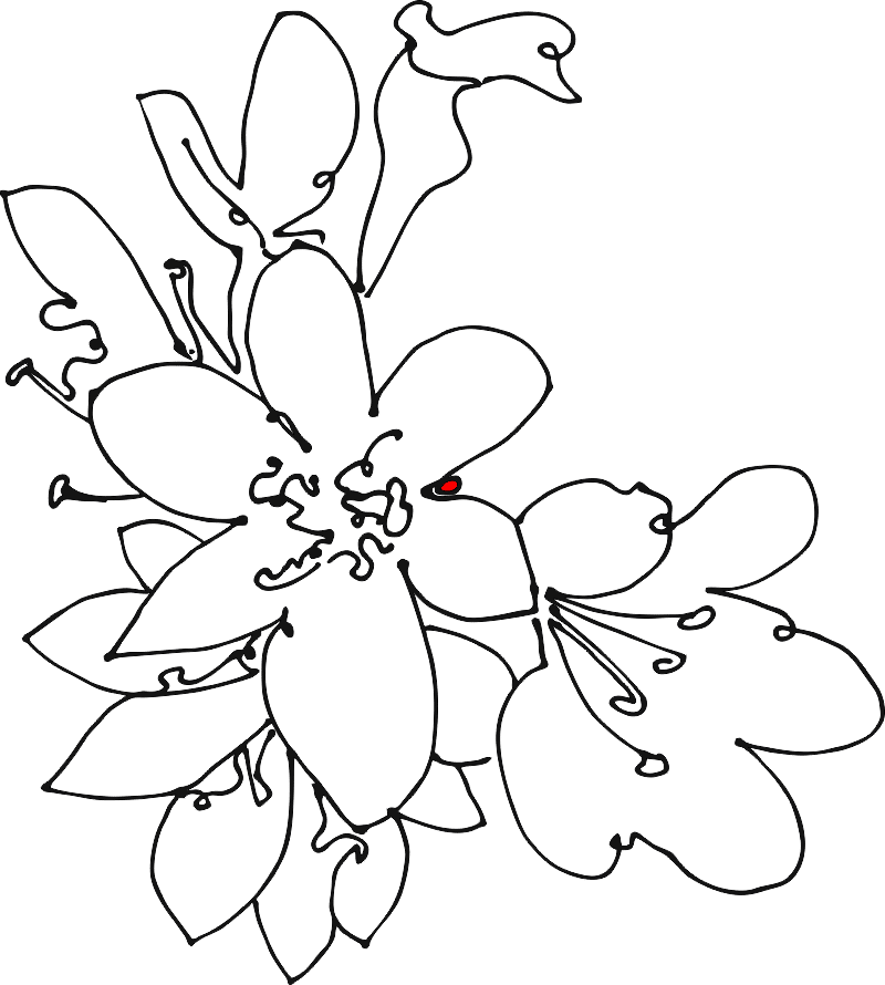 apple blossoms sketch